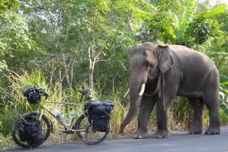 RadReisender trifft einen Elefanten
