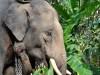 Chang (thailändisch für Elefant)